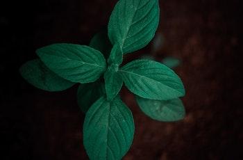 aromatic-close-up-dark-1146385.jpg