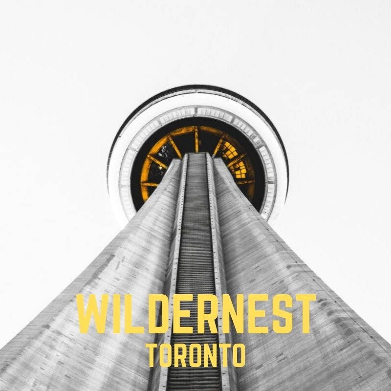 TORONTO HAS THE WILD   Toronto, a city surrounded by water and an abundance of nature. We live among these changing elements and within that often forget what is outside our doorstep.
