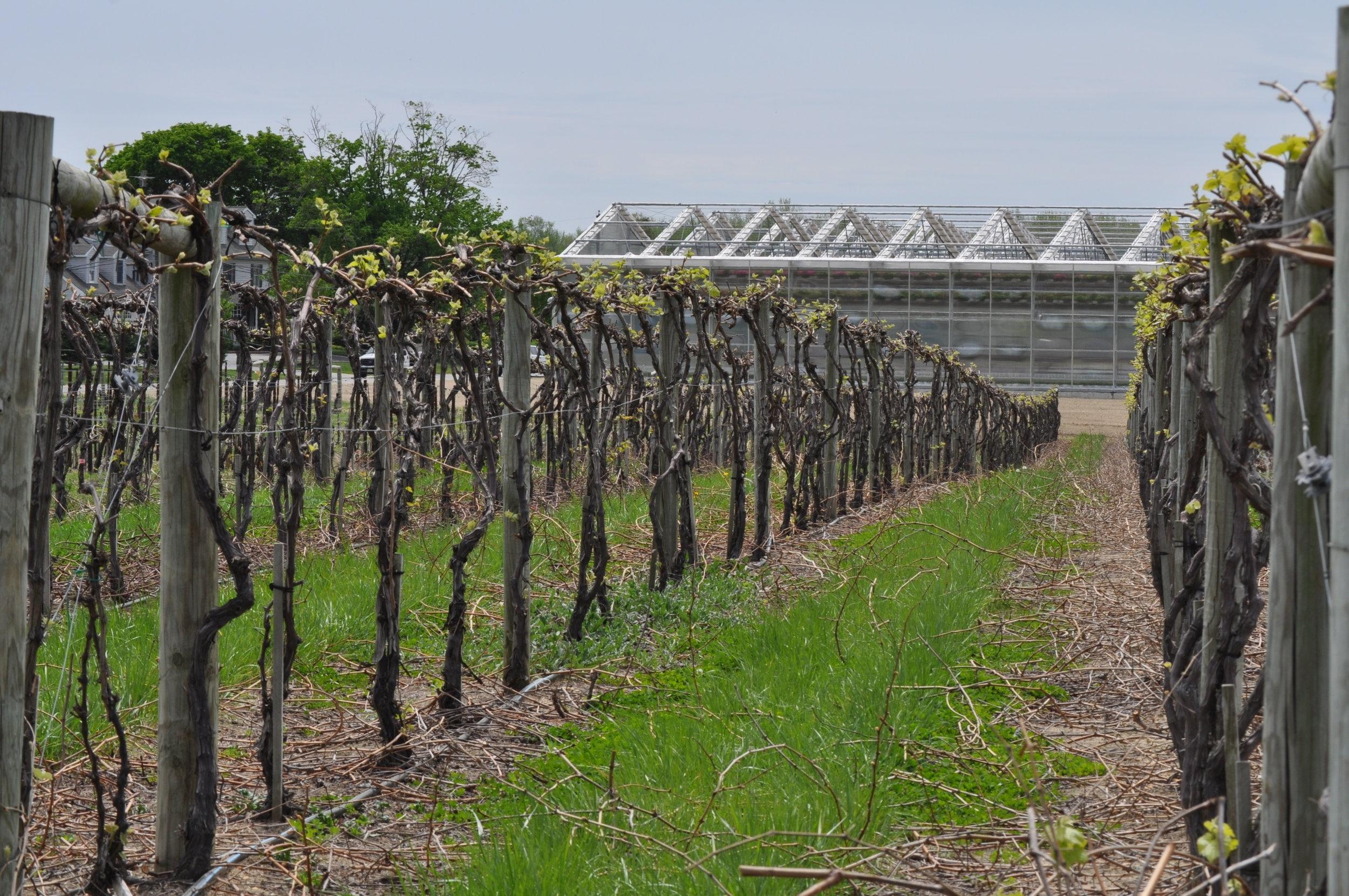 Fruitwood Farms -