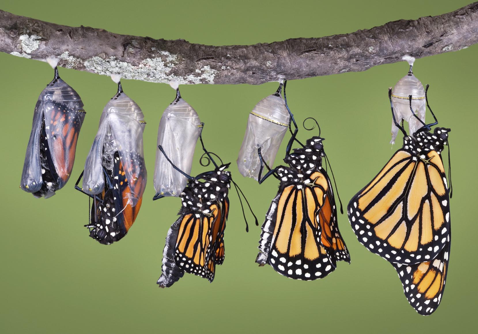 butterfly-process.jpg
