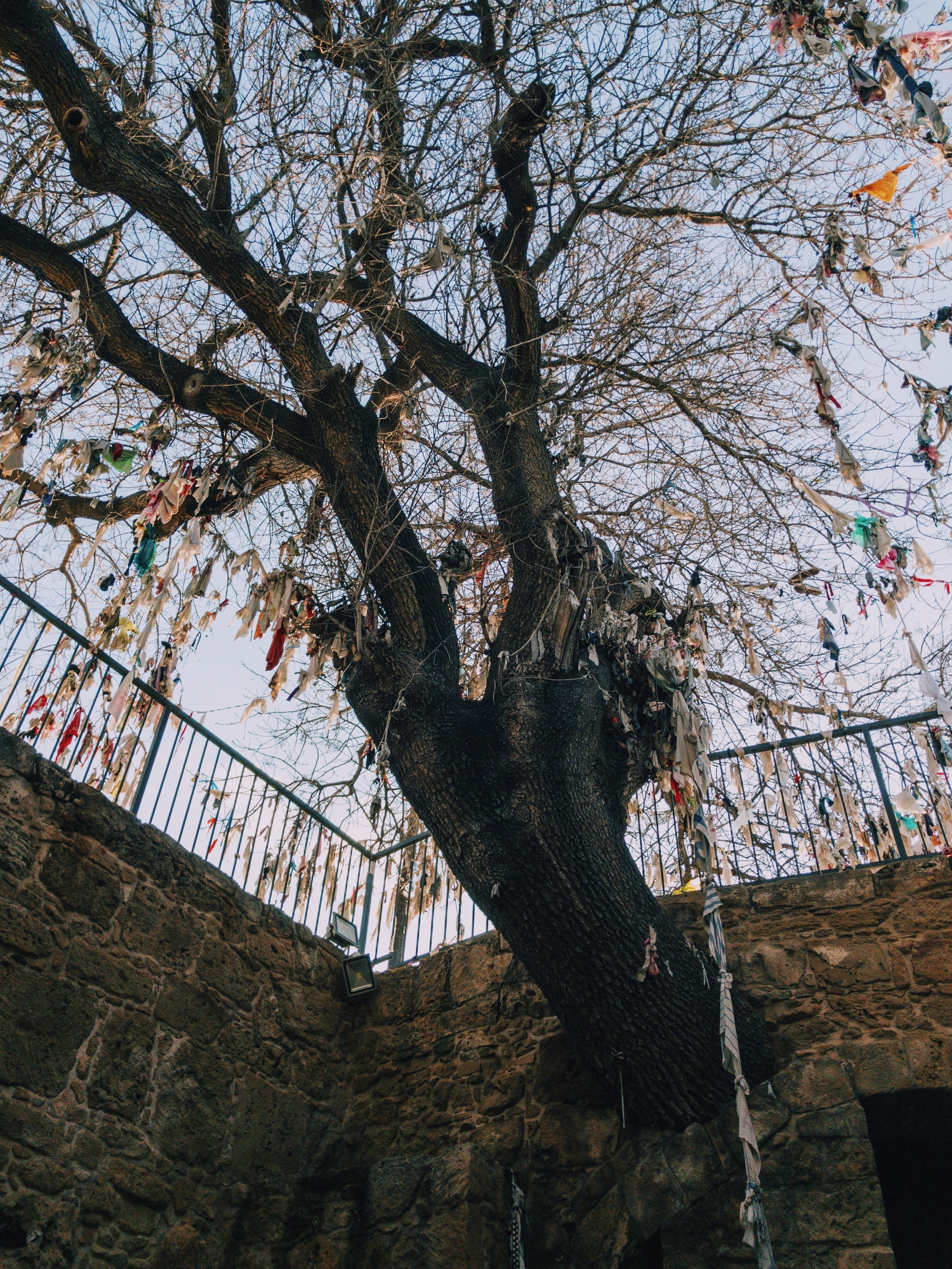 The tree is covered with votive rags.