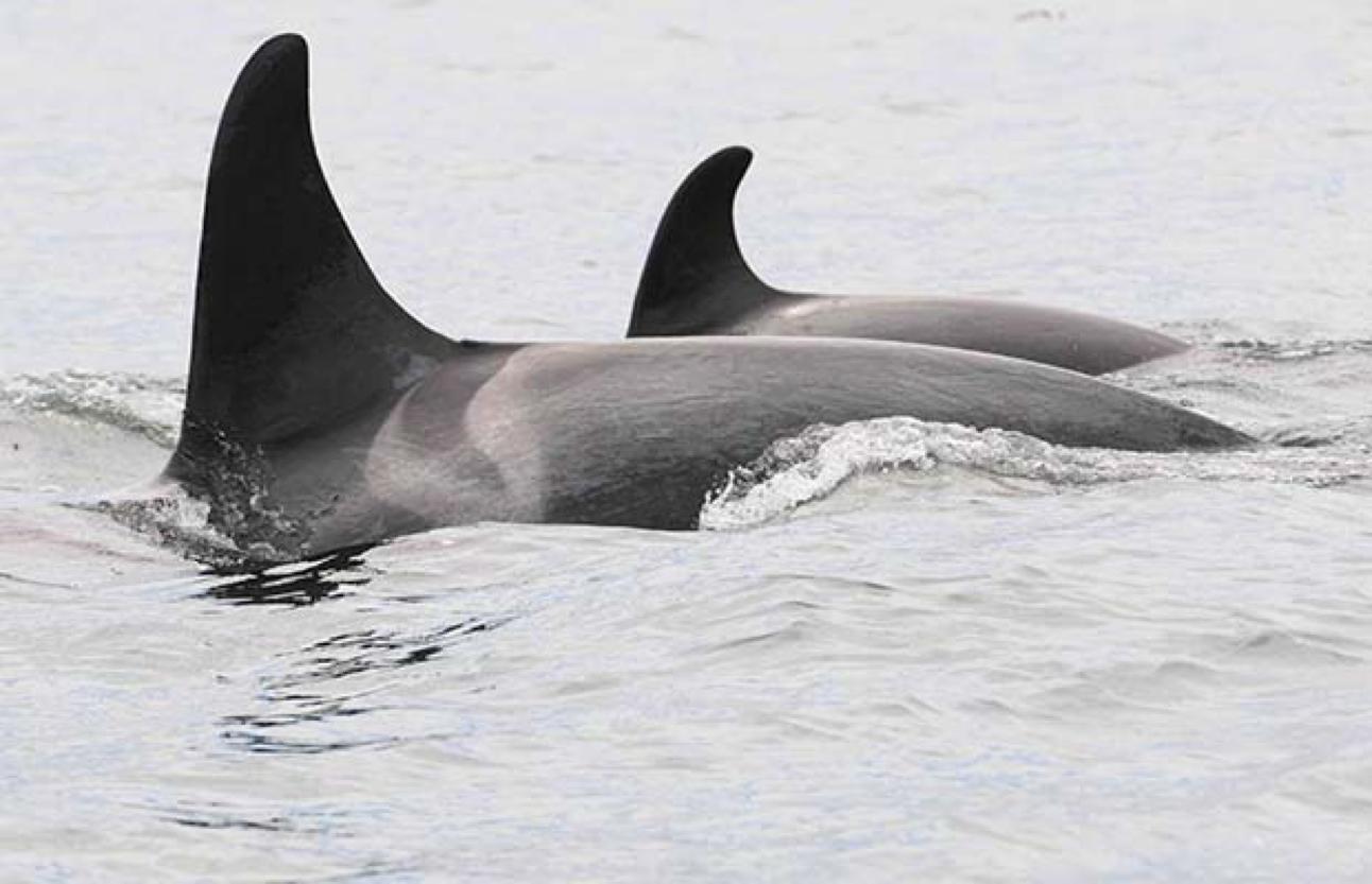 Photo by Handout/Vancouver Aquarium