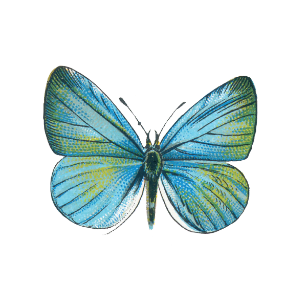SKINCARELOUNGE-icon-butterfly-simple-PRINT.png