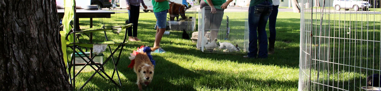 Petting Zoo -