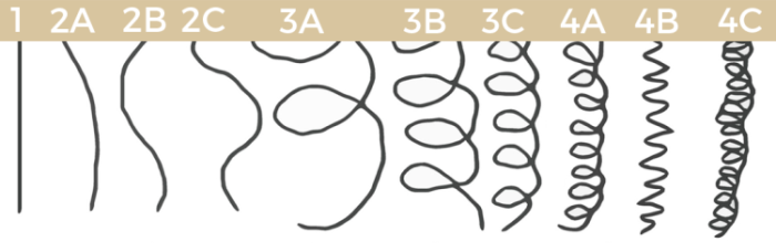 hair-type-chart.png