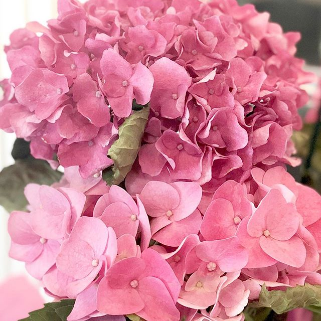 """The Hubs knows hydrangeas are my fave! To quote Sally from The Peanuts comic strip, """"Isn't he the sweetest thing?!"""" 😍🌸💞"""
