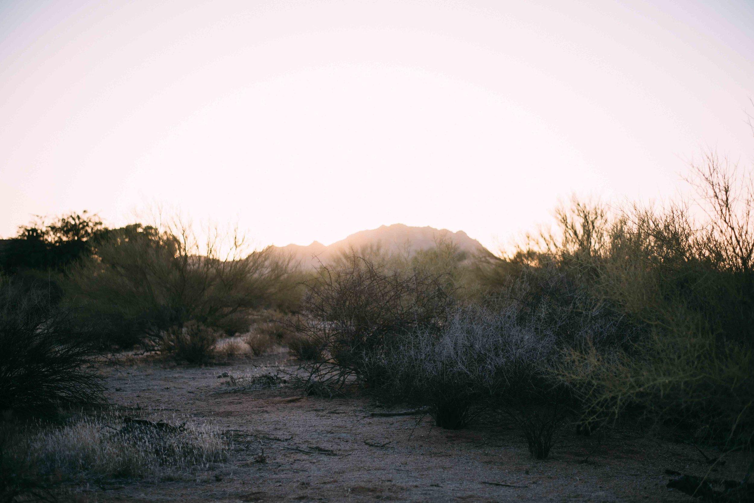 Arizona Portrait Equine_Alyssa Ryan Photography30.jpg