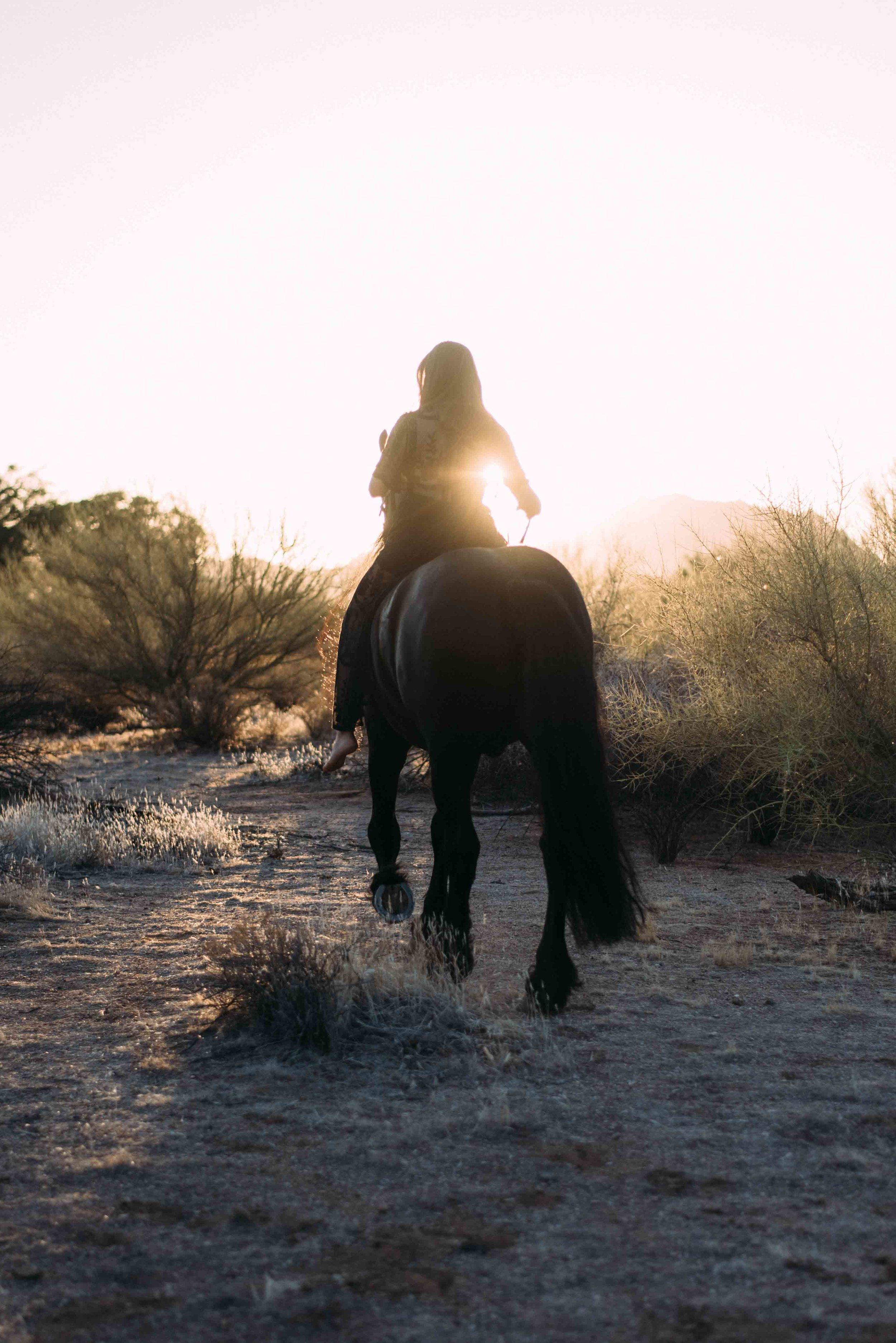 Arizona Portrait Equine_Alyssa Ryan Photography20.jpg