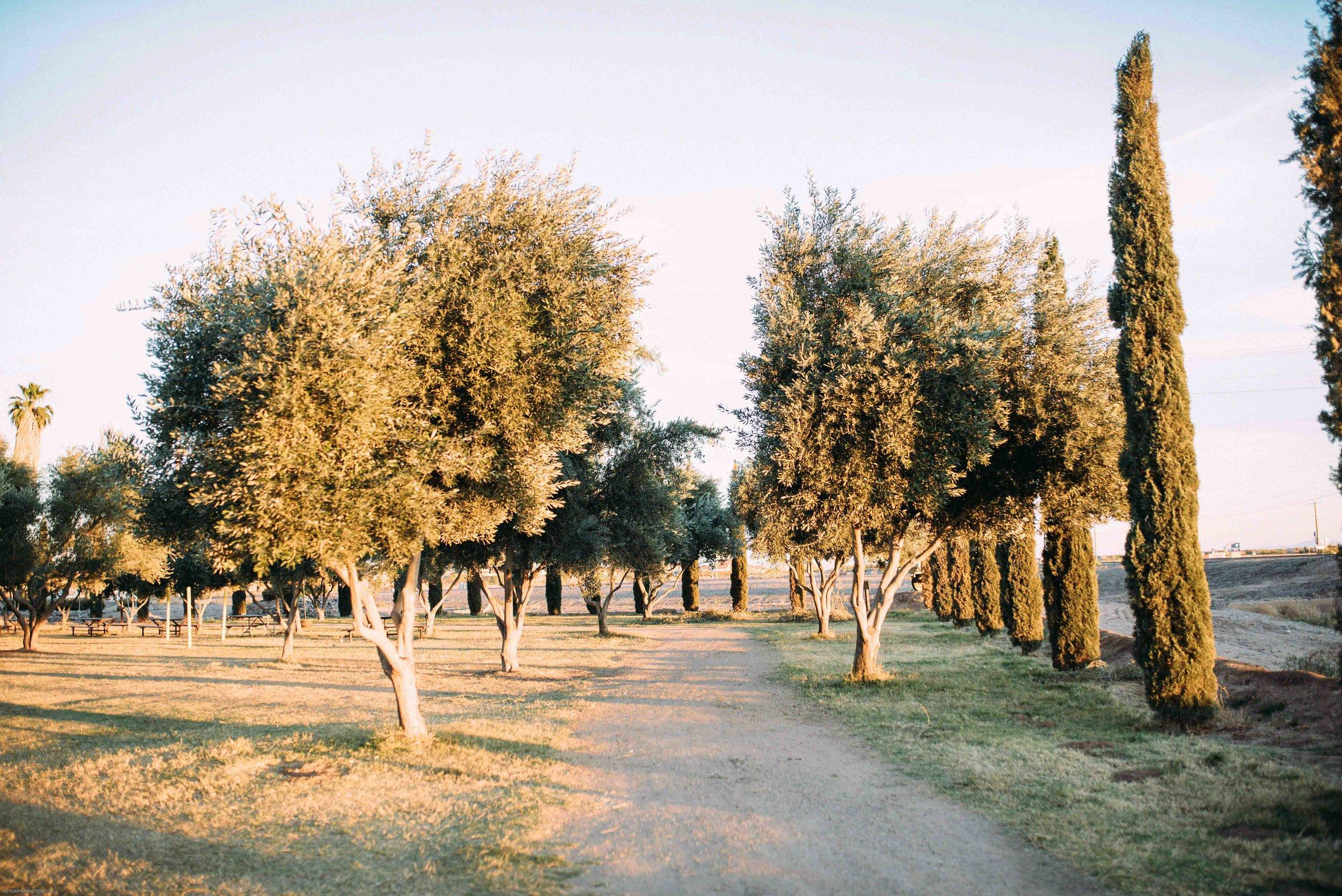 Queen Creek Olive Mill Arizona Wedding_Alyssa Ryan Photography54.jpg
