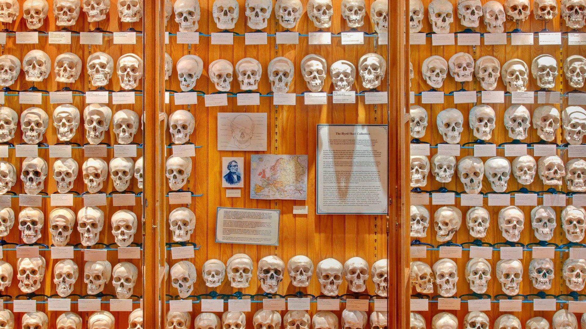 muttermuseum.jpg