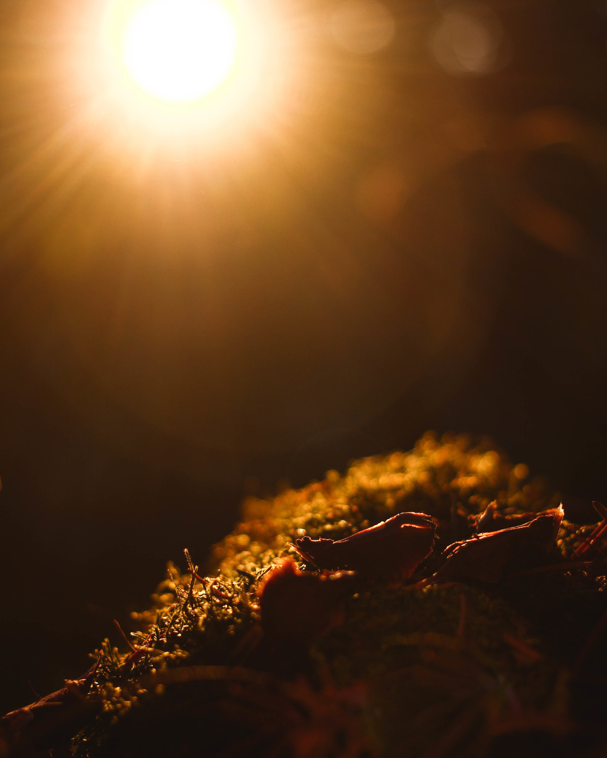 Forest light.jpg