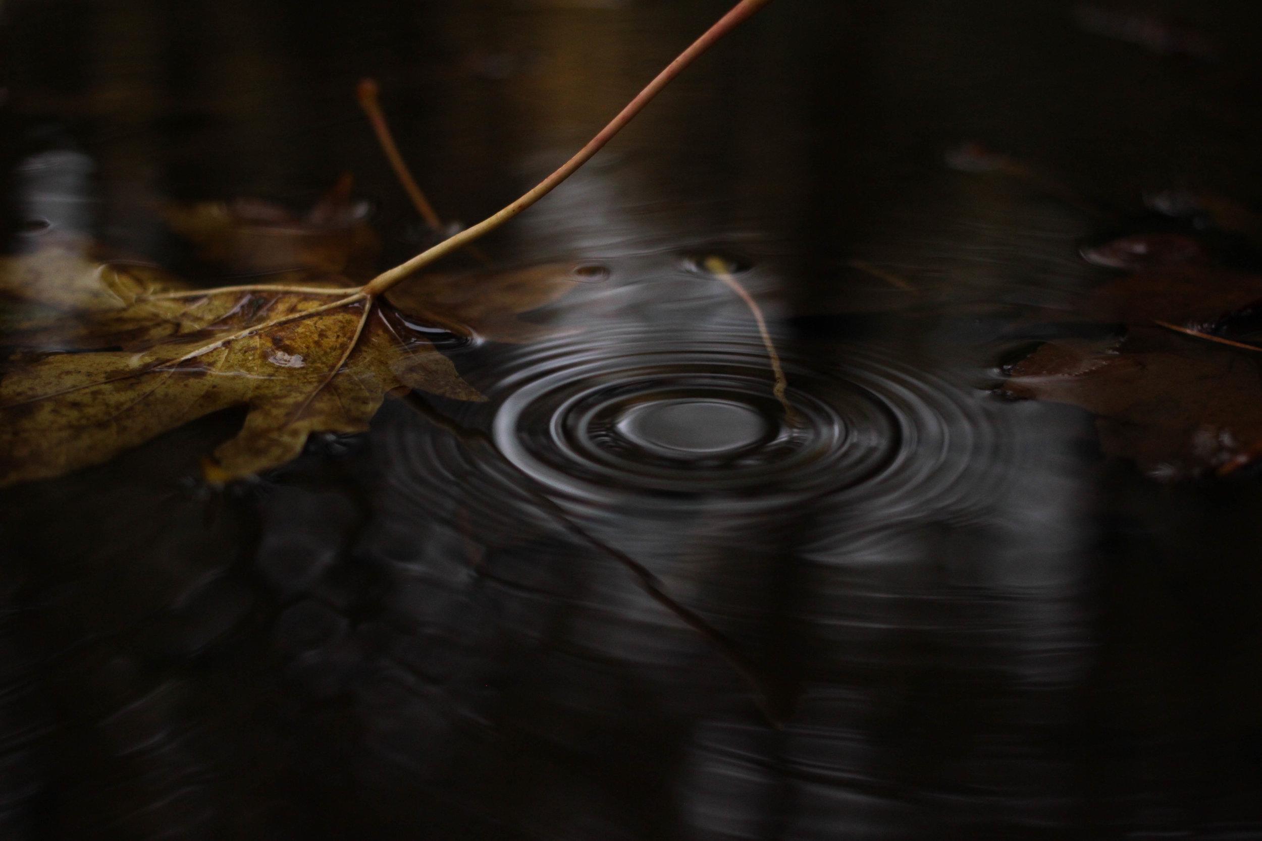 Leaf Drop.jpg