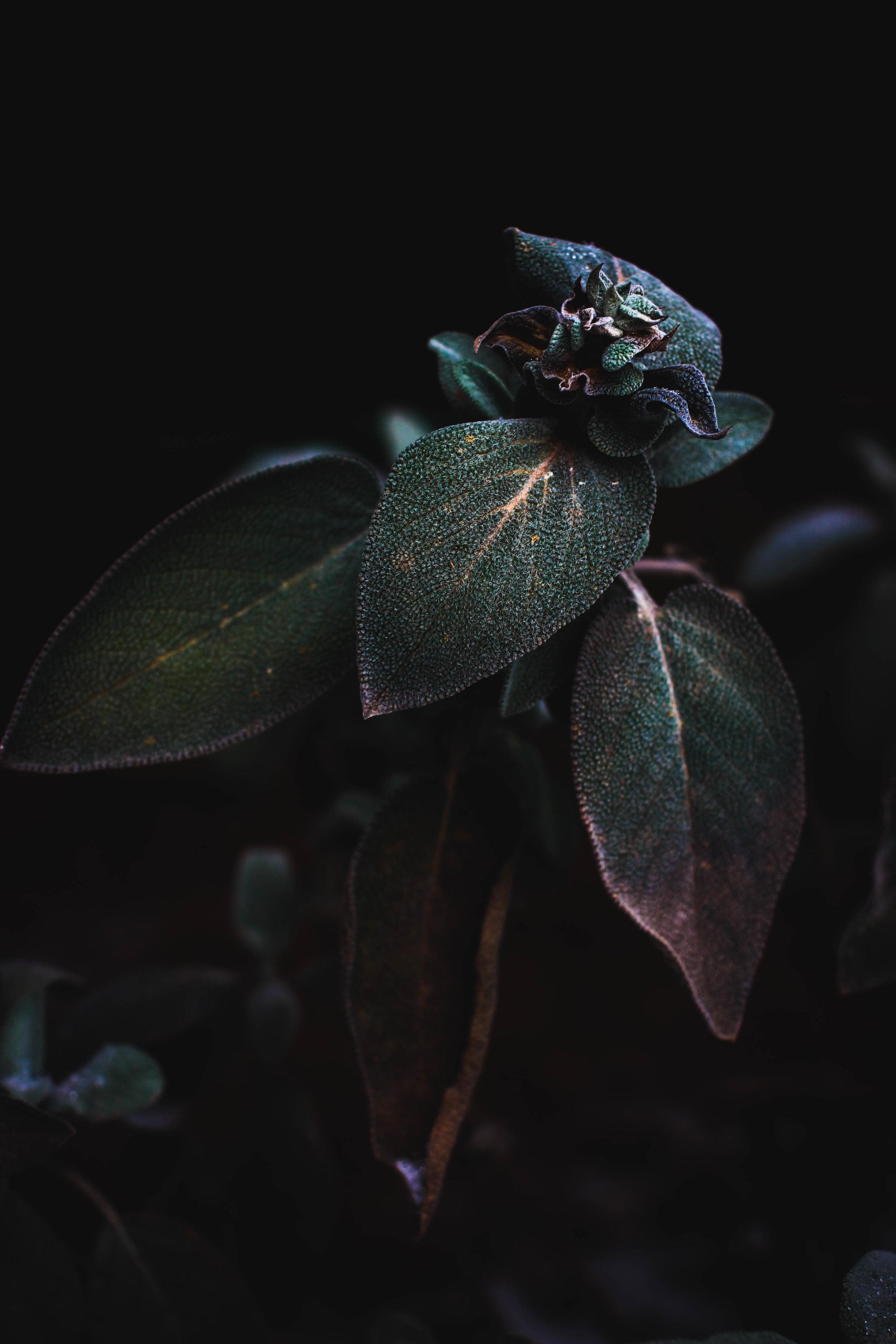 Sage Plant Final.jpg