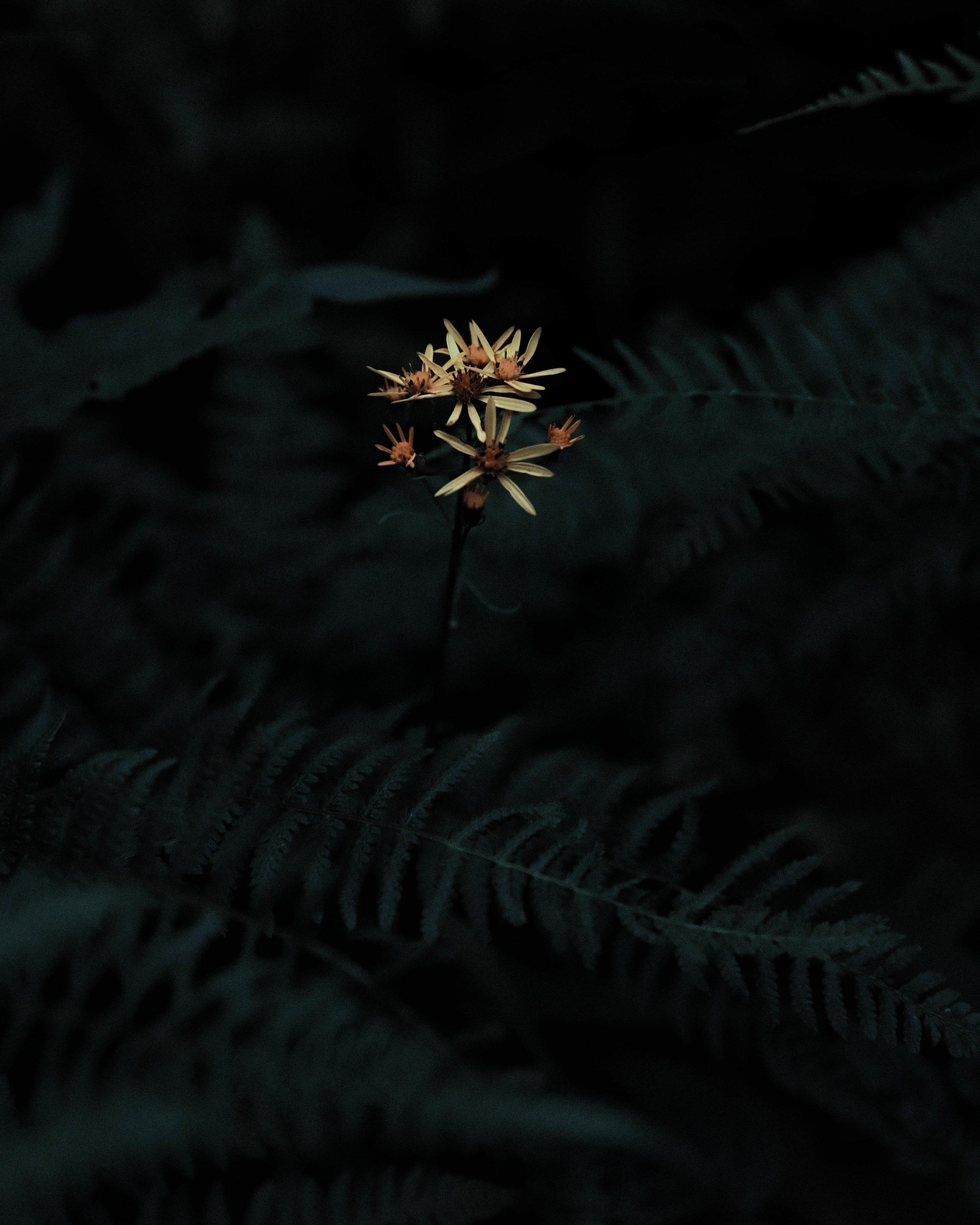 Funky Plant color.jpg