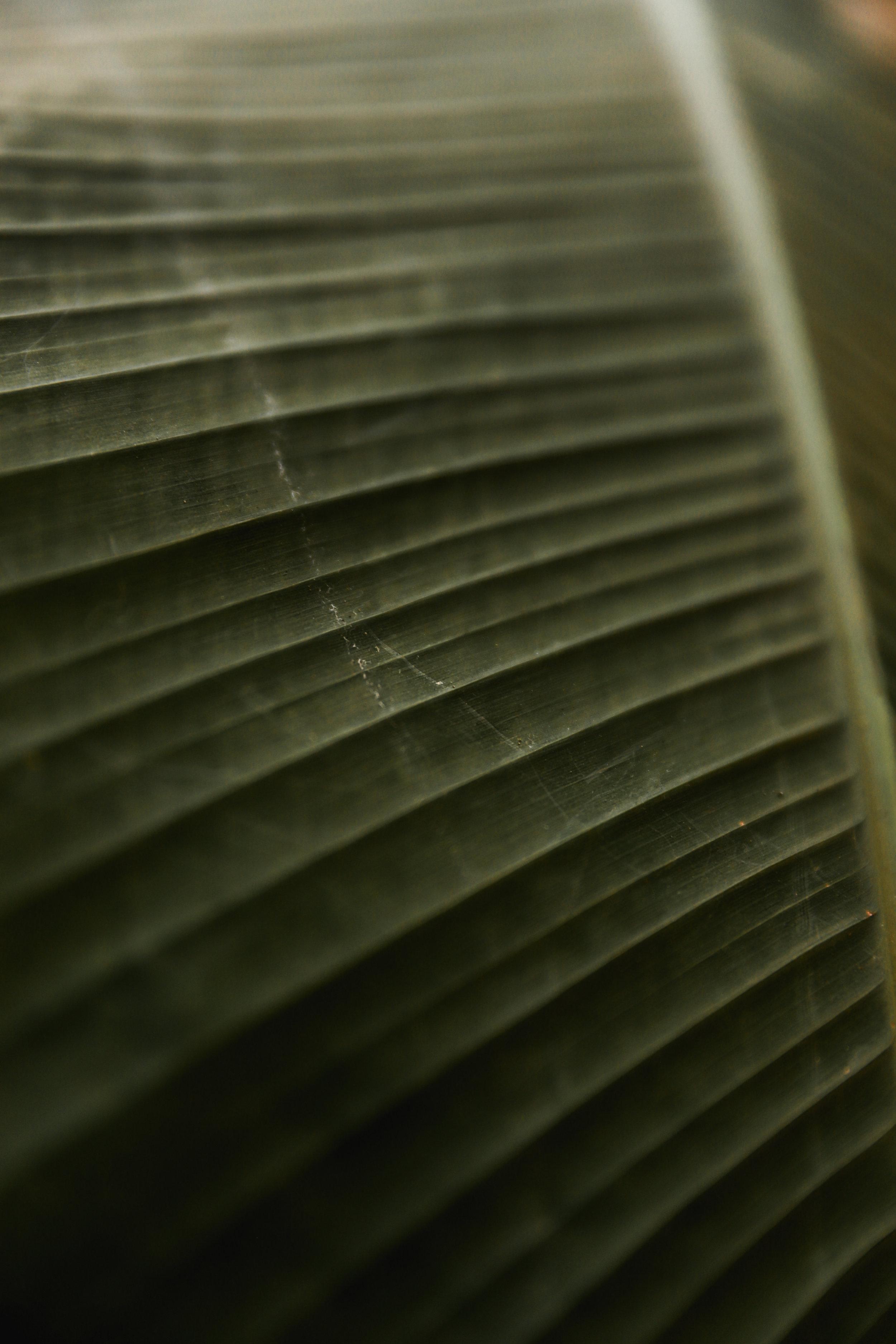 Liv Plant Shop-4.jpg