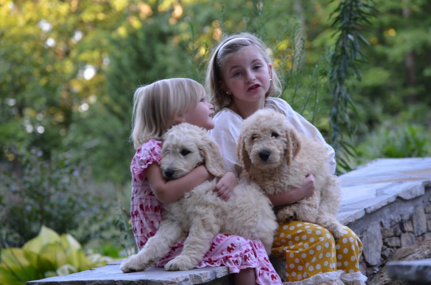 two-Goldendoodle-puppies-20.jpeg
