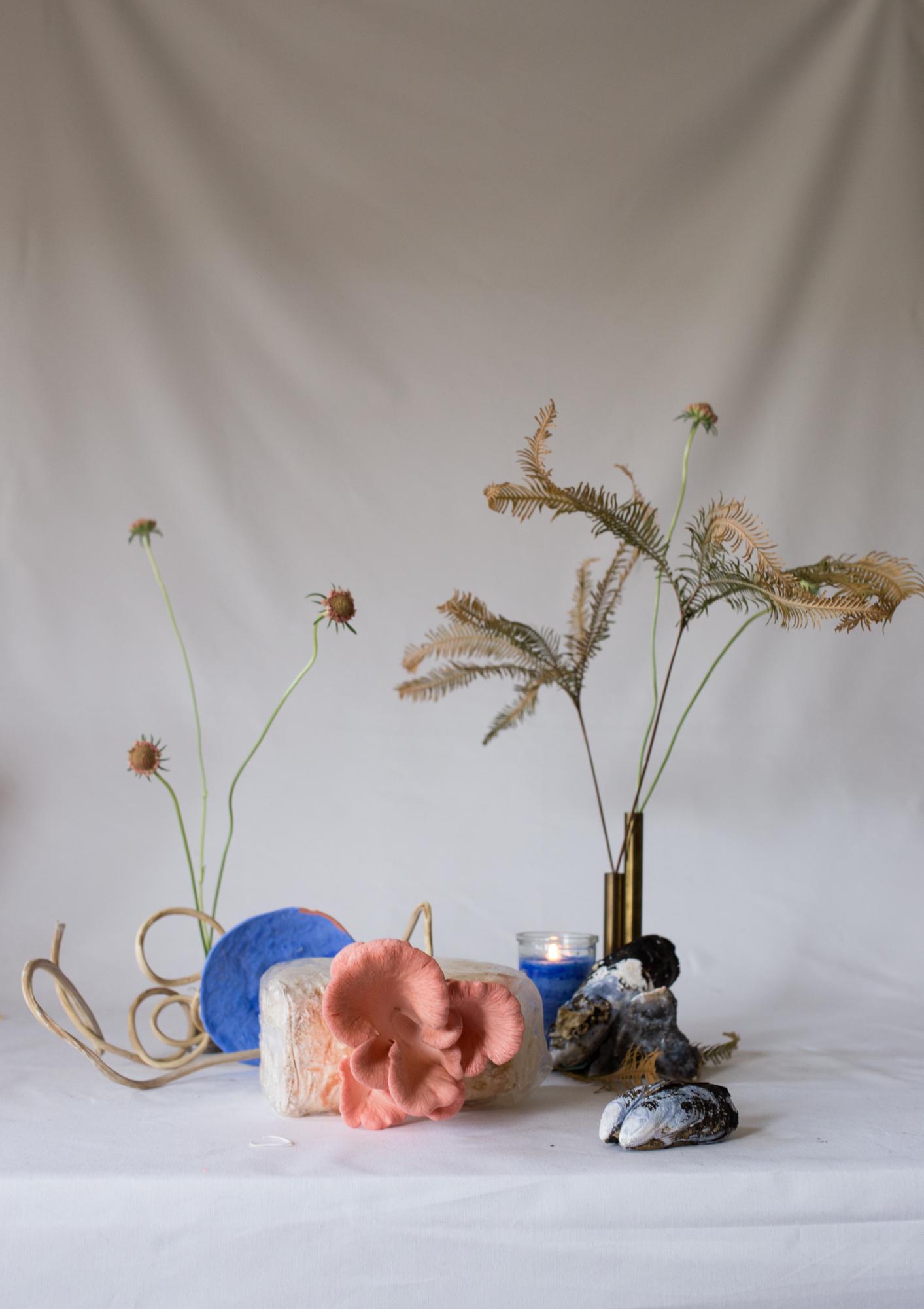 08232018-milkweed-9137.jpg