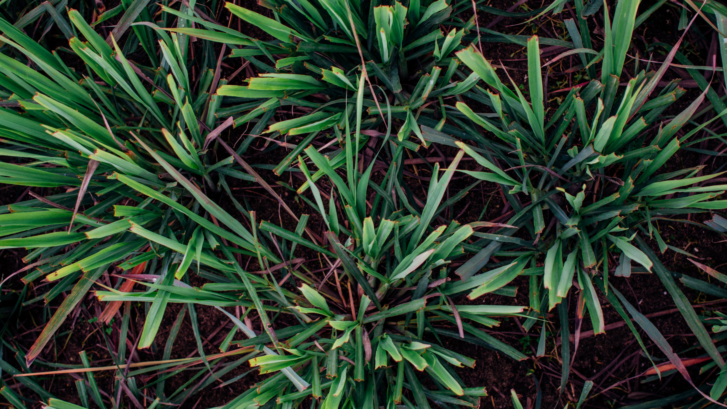 psf_herbs-8.jpg