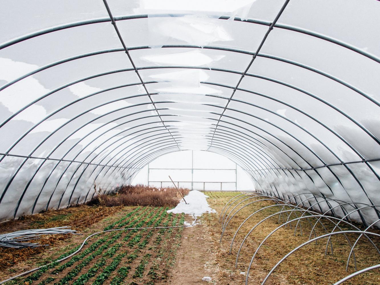 greenhouse_distruction_01_2017_web-23.jpg