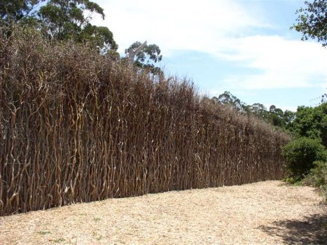 Curly Willow Wild Top Fencing