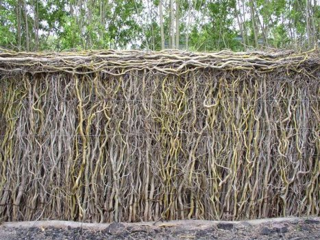 Curly Willow Rolled Top Fencing