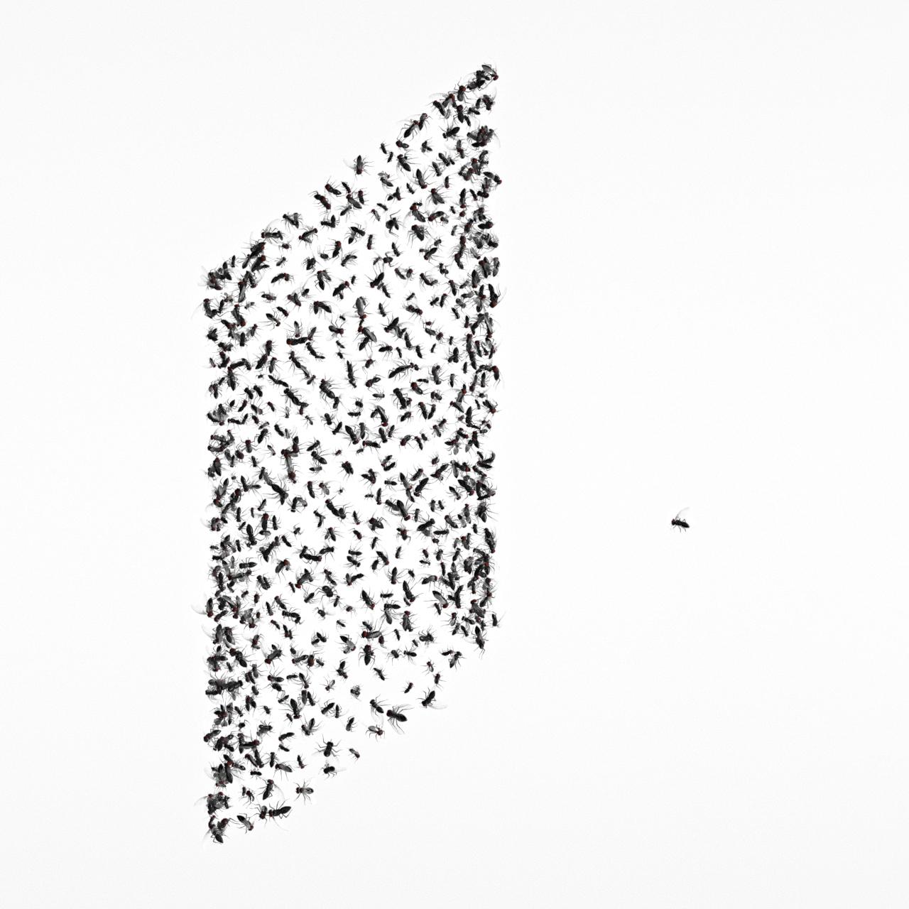 Flys_01.jpg