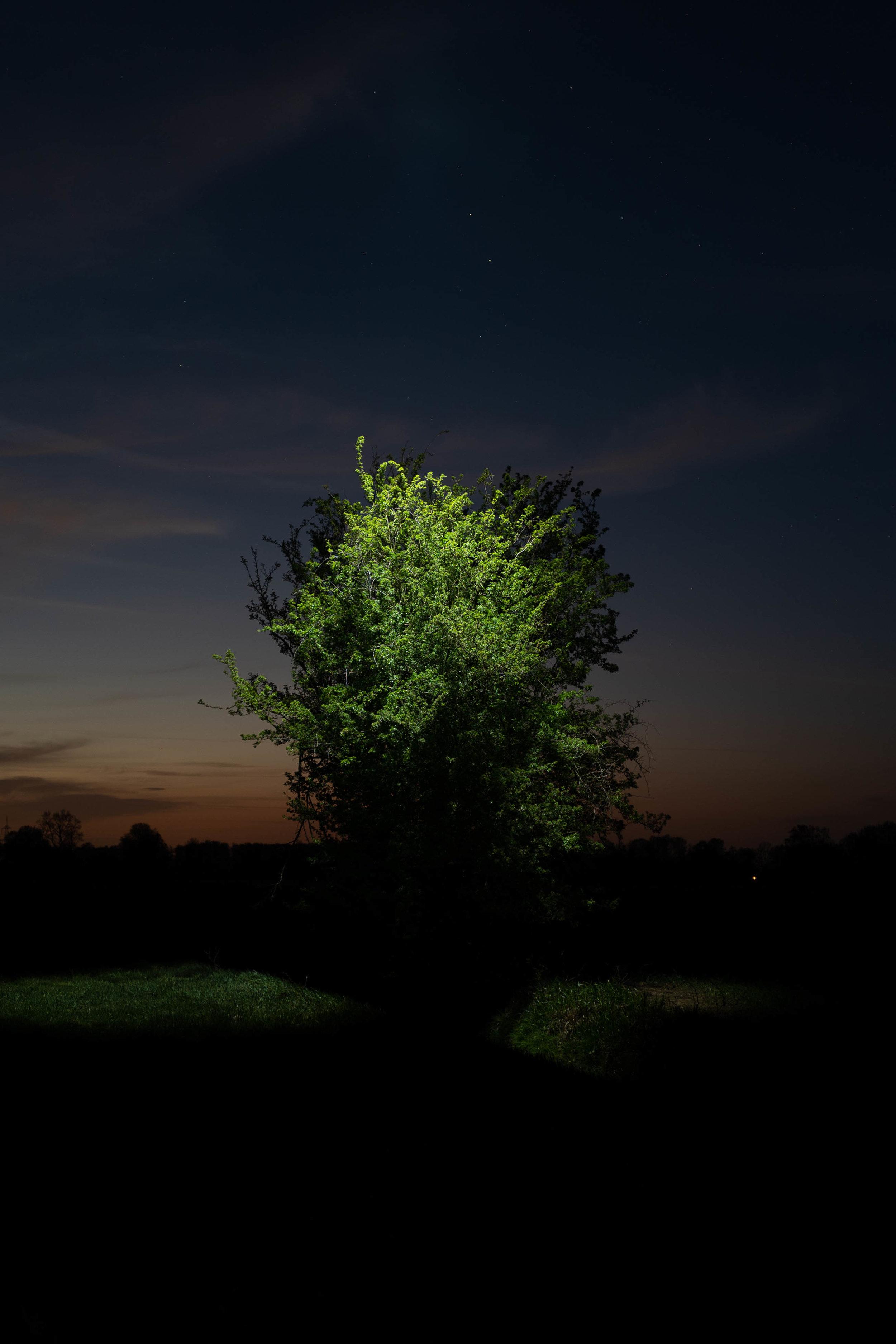 19/17 - Baum im Dunklen