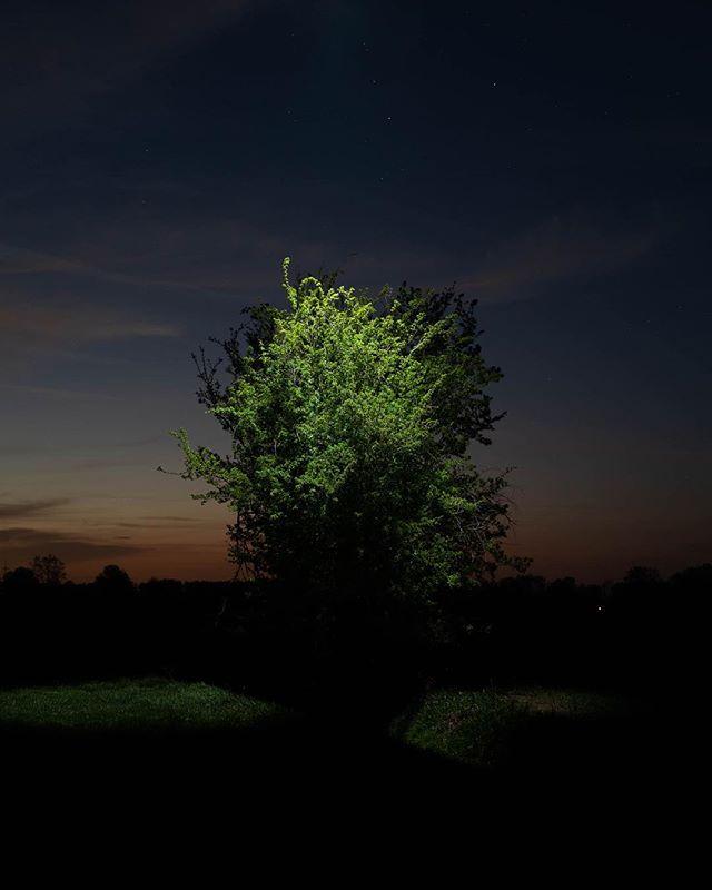 🌳 + #toplight + #sunset