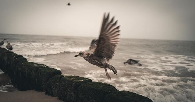 Seagulls on a stormy beach. Shoot last week on a weekend trip.  #leica #leicaq