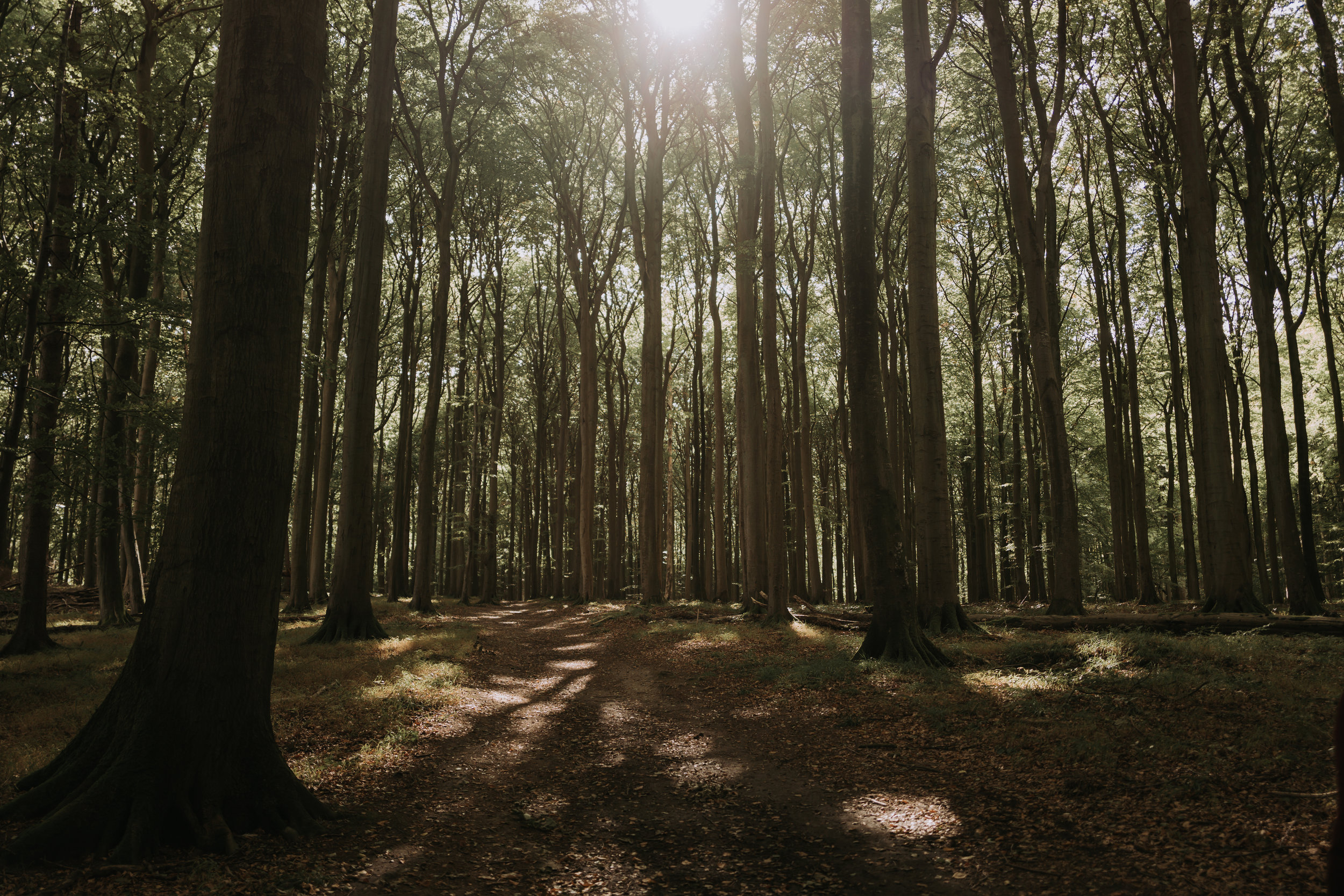 19/30 - Schatten im Wald.