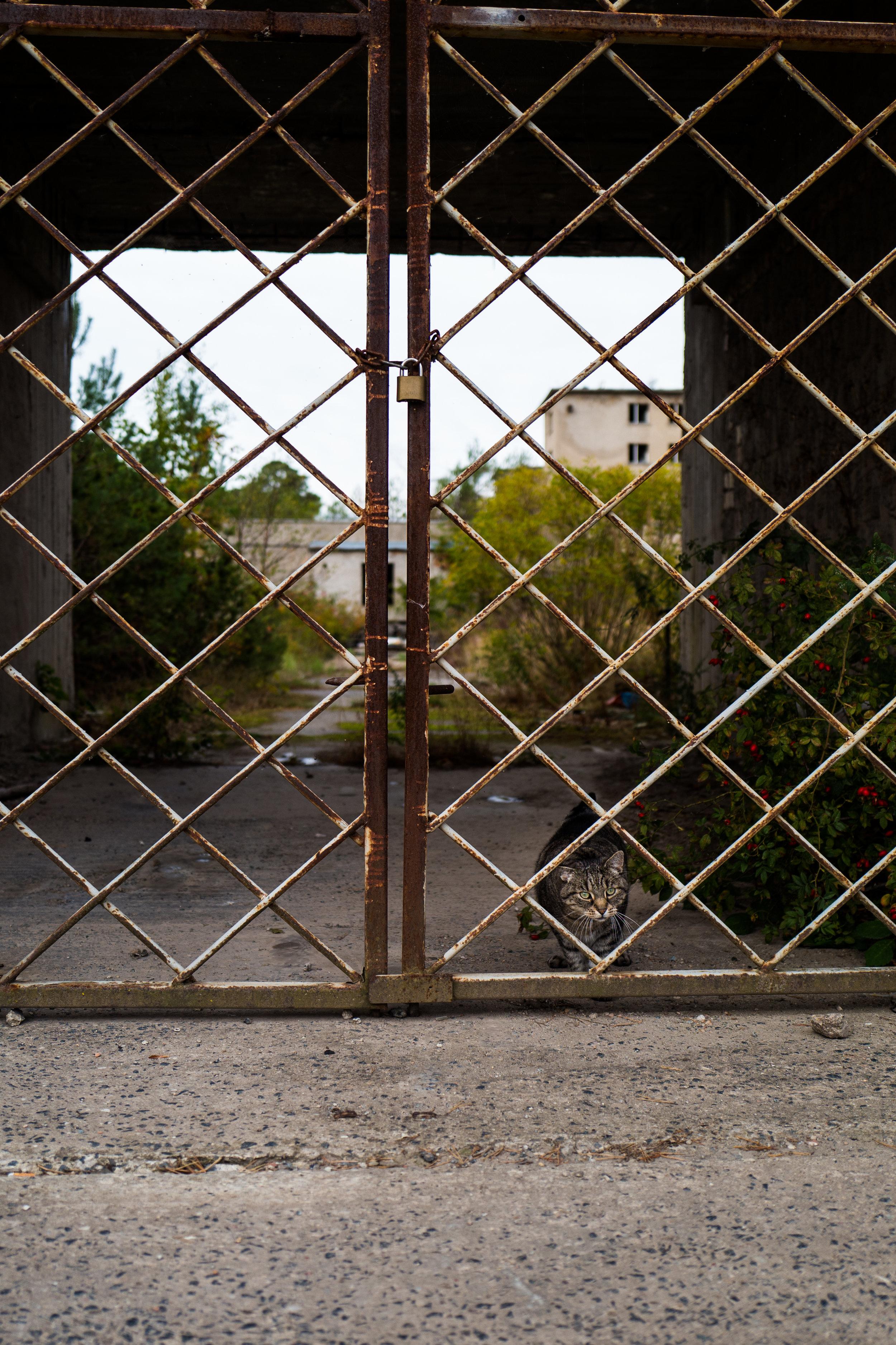 19/33 - Im Gegensatz zu mir kommt die Katze am Tor vorbei.