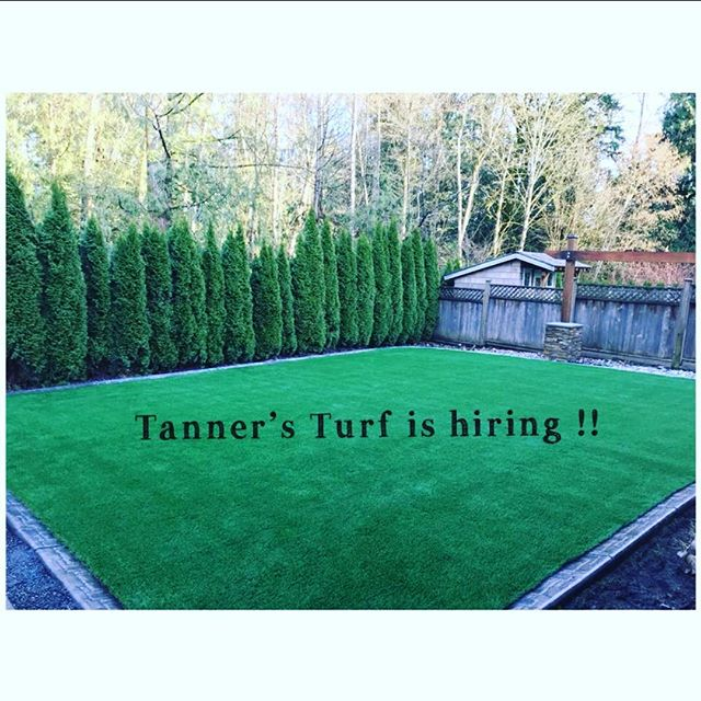 Tanners Turf is hiring!  Please apply online at tannersfurf.com #competitivewages #installers #tannersturf.com #365green #sytheticgrass #tannersturfservice #tannersturf365green #tannersturfishiring #jobsearch #workattannersturf