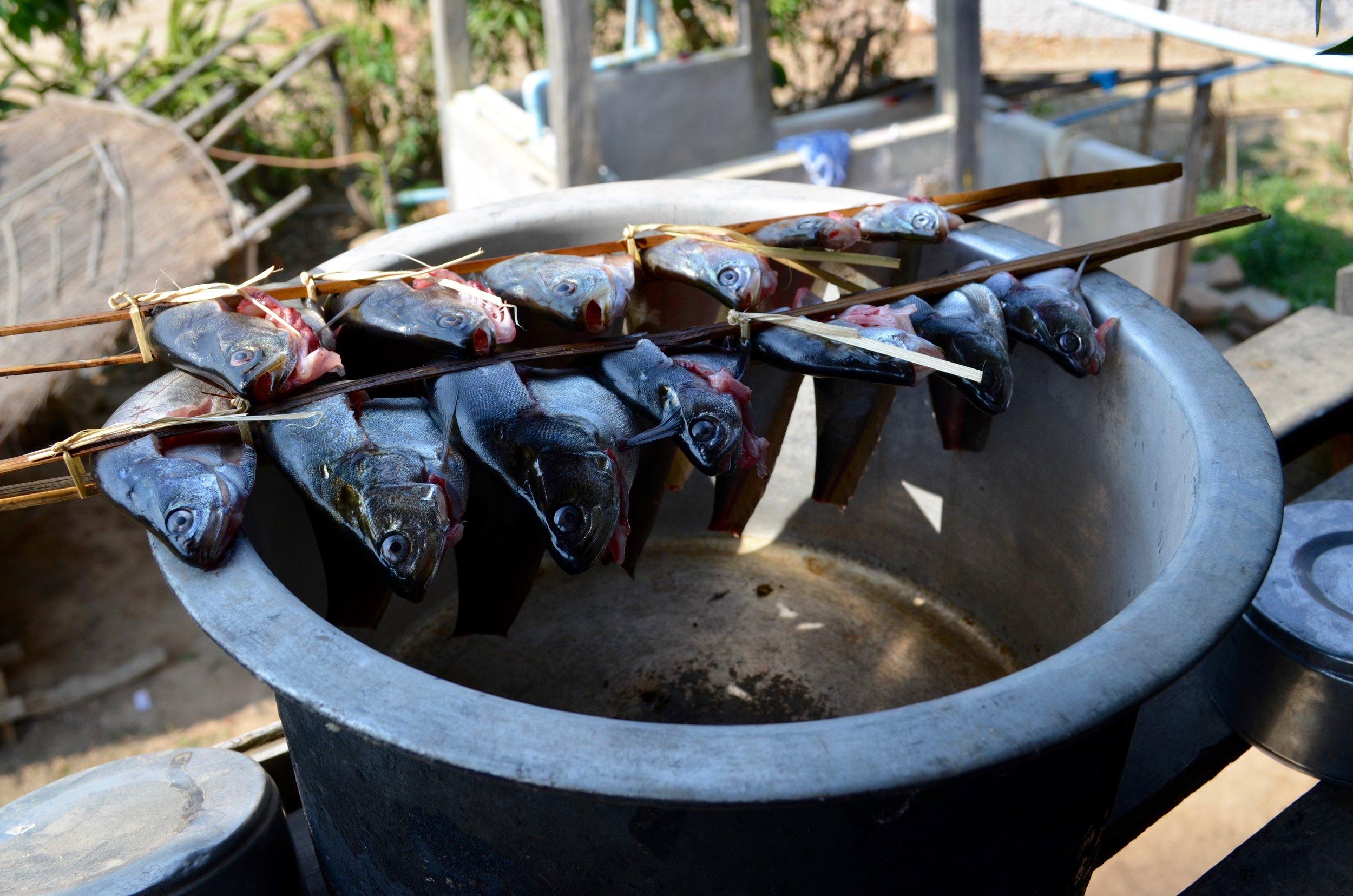 foodx_myanmar (4).jpg