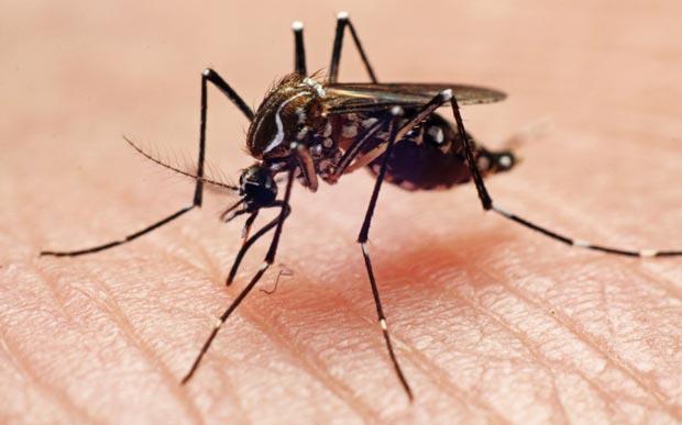 mosquito-repellent.jpg
