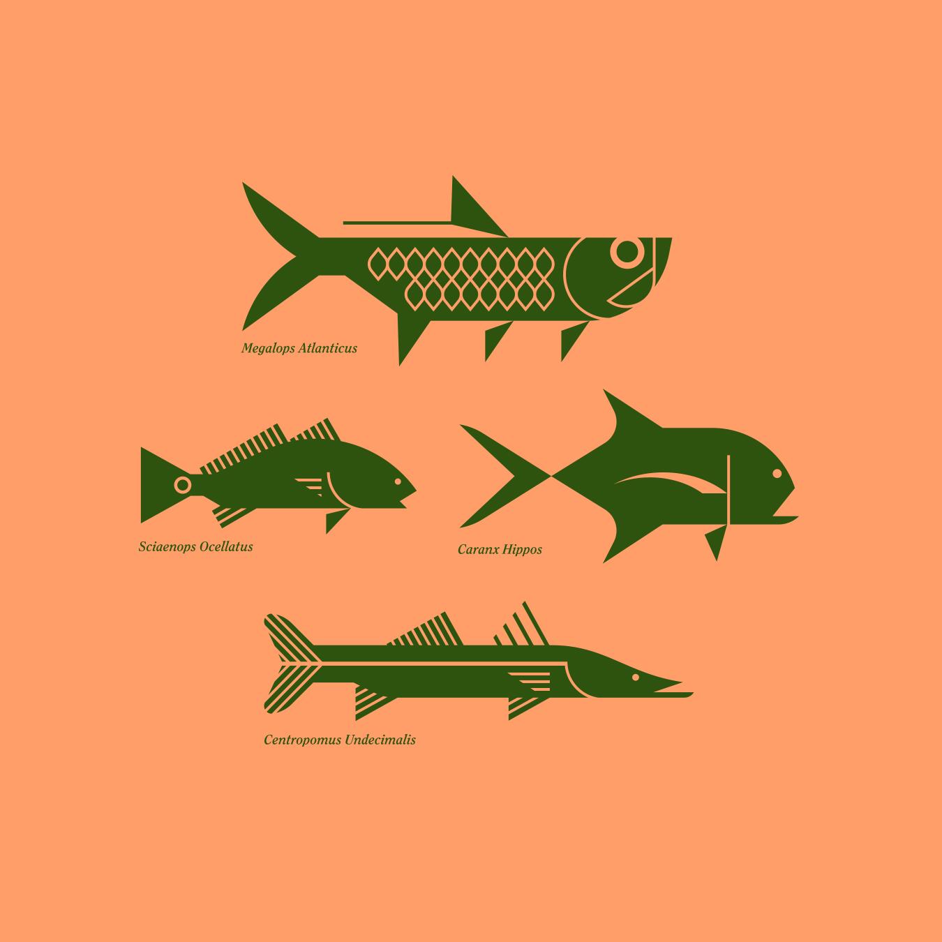 Tarpon, Redfish, Jack and Snook Illustration