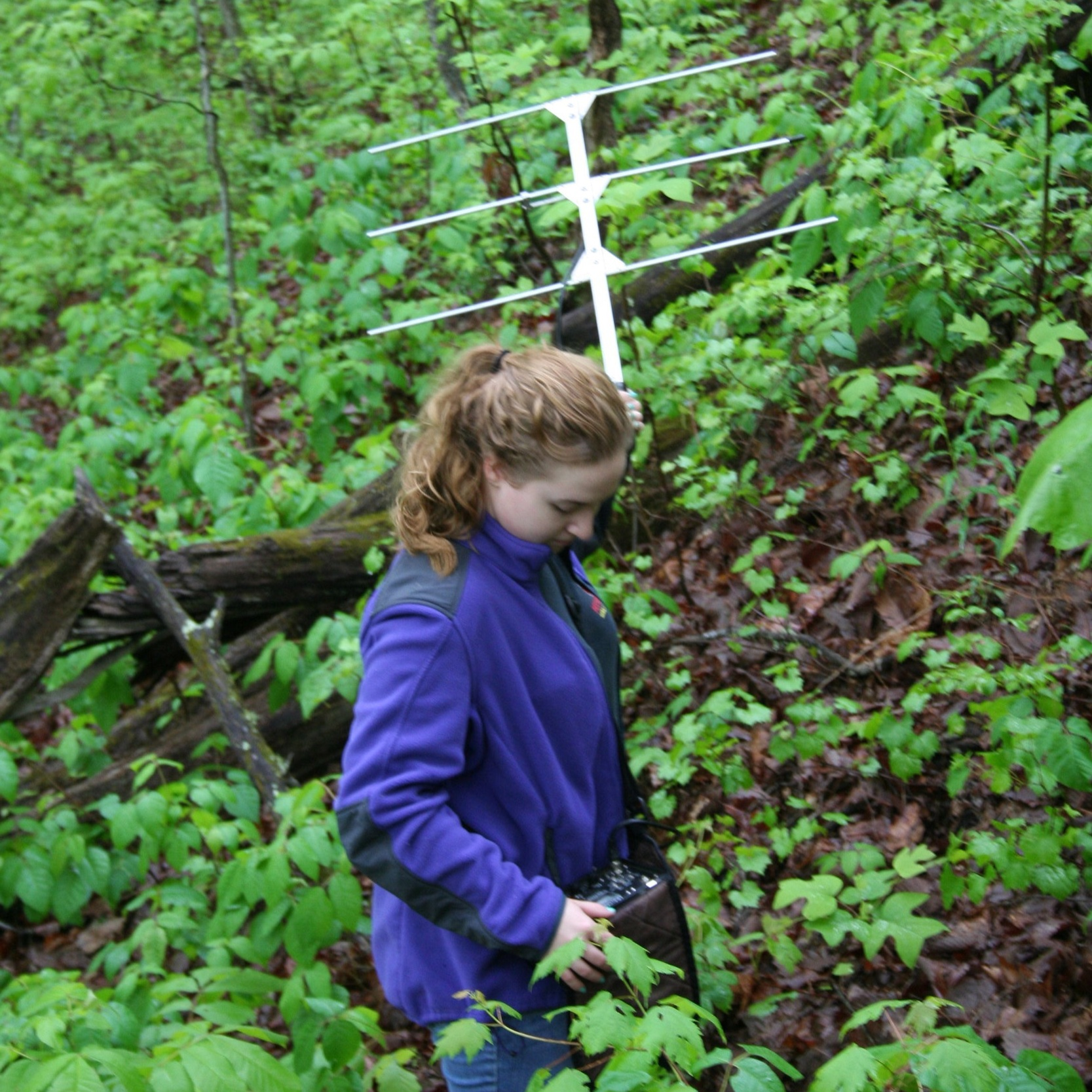 Tracking a Box Turtle