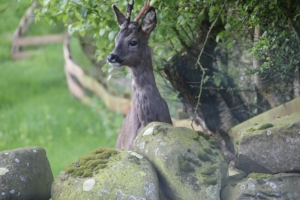 Burnside holiday cottage to let Galloway, wildlife in the garden.jpg