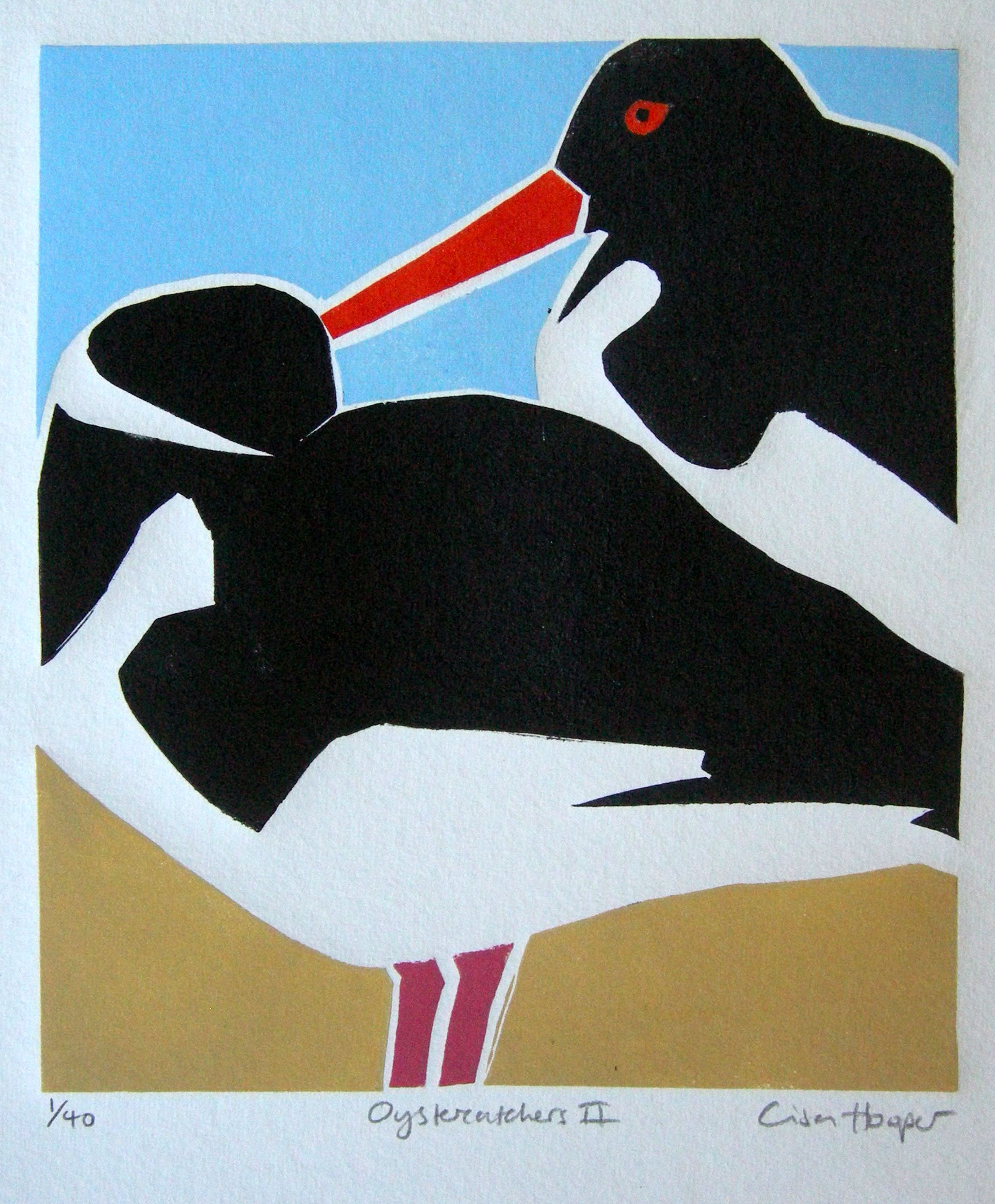 glorious galloway oystercatchers by lisa hooper an artist in port william.jpg