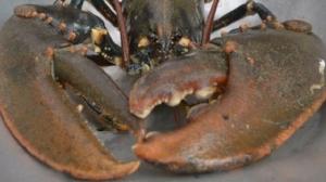 scottish lobsters.jpg
