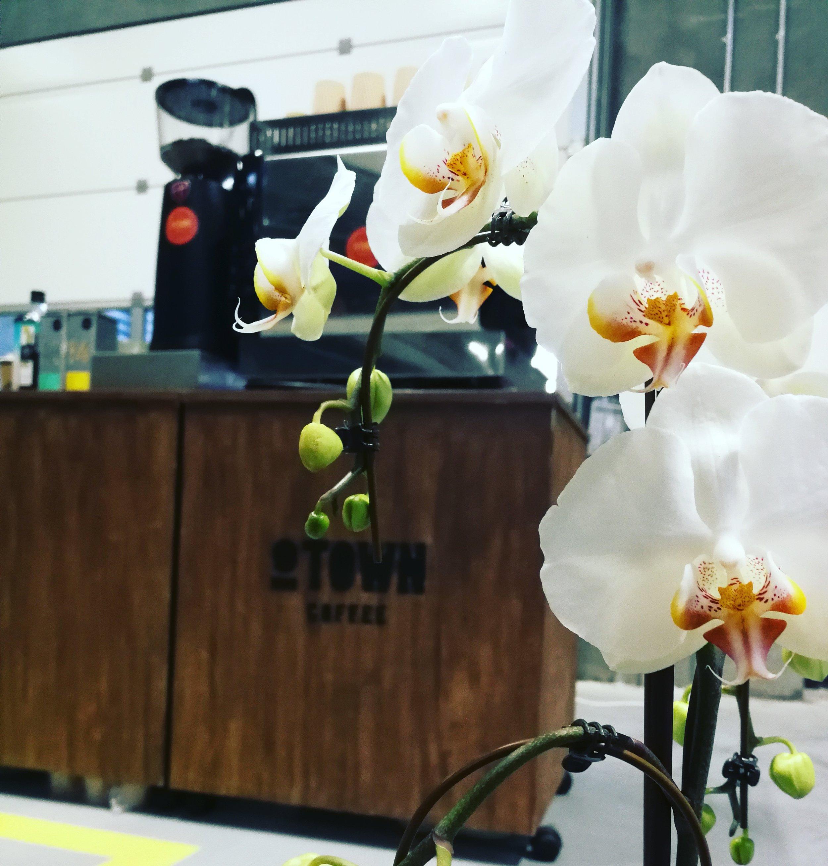 Mobil kaffebar hos GASA - Åbning af deres nye lager