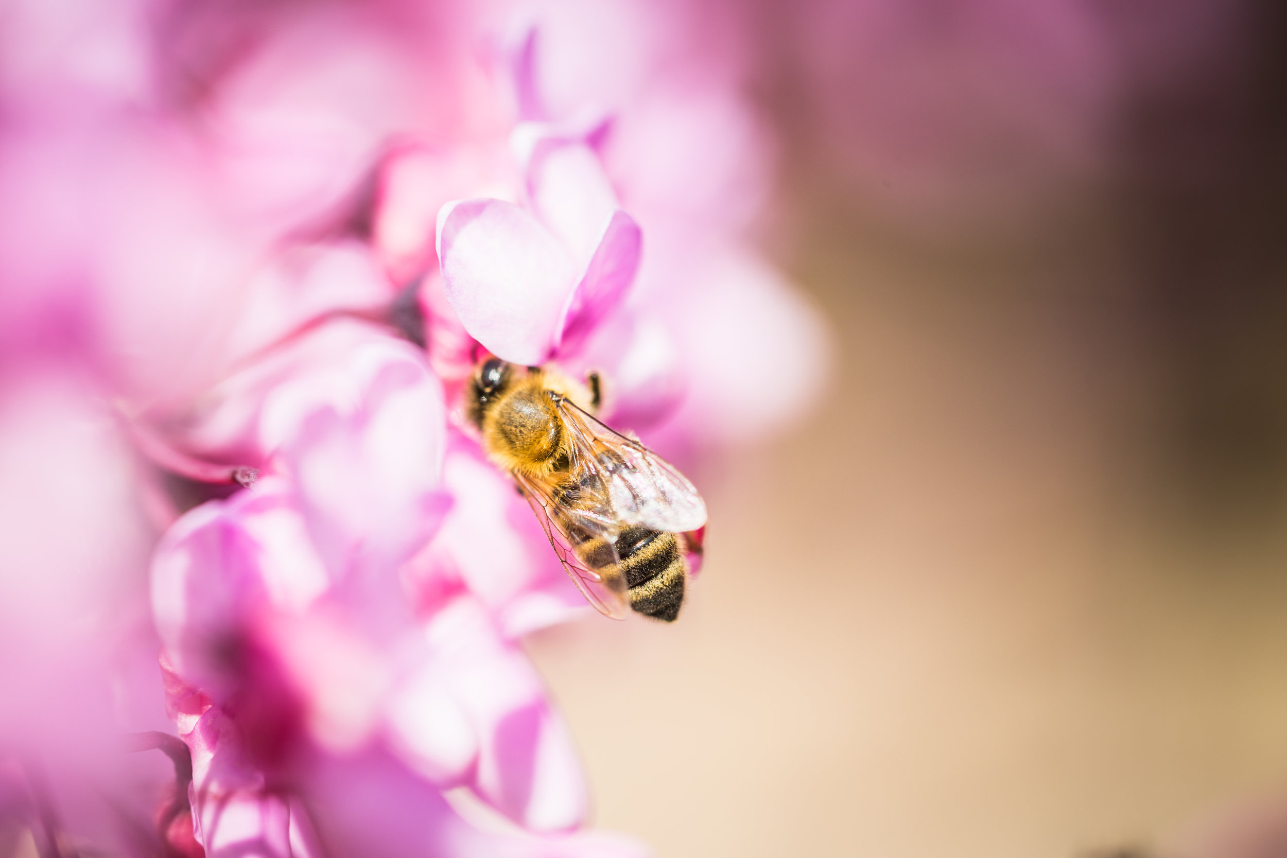 bee-at-work-close-up-picjumbo-com.jpg