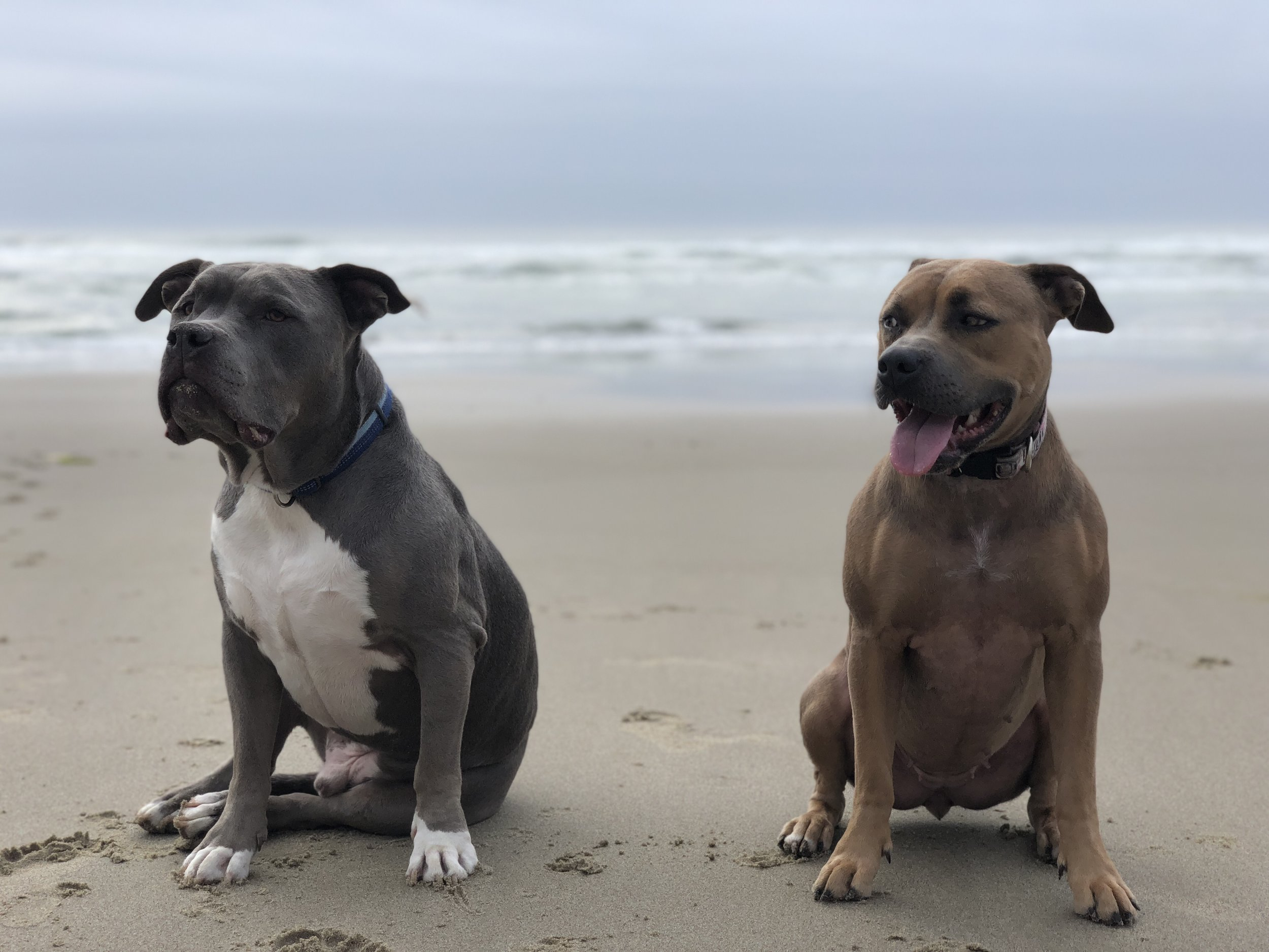 Spontaneous trip to the Oregon Coast with our pups, Newman & Delilah.