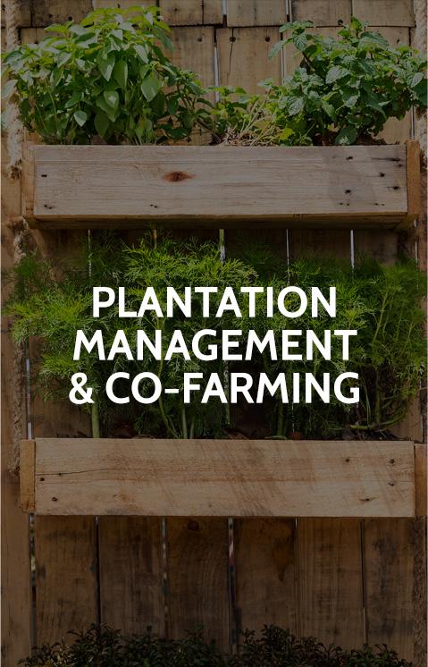 home_plantationmanagement.jpg