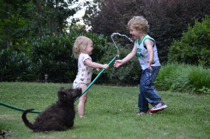 labradoodle-playing-children.jpeg