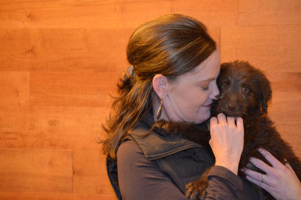 chocolate-Labradoodle-puppy-9.jpeg