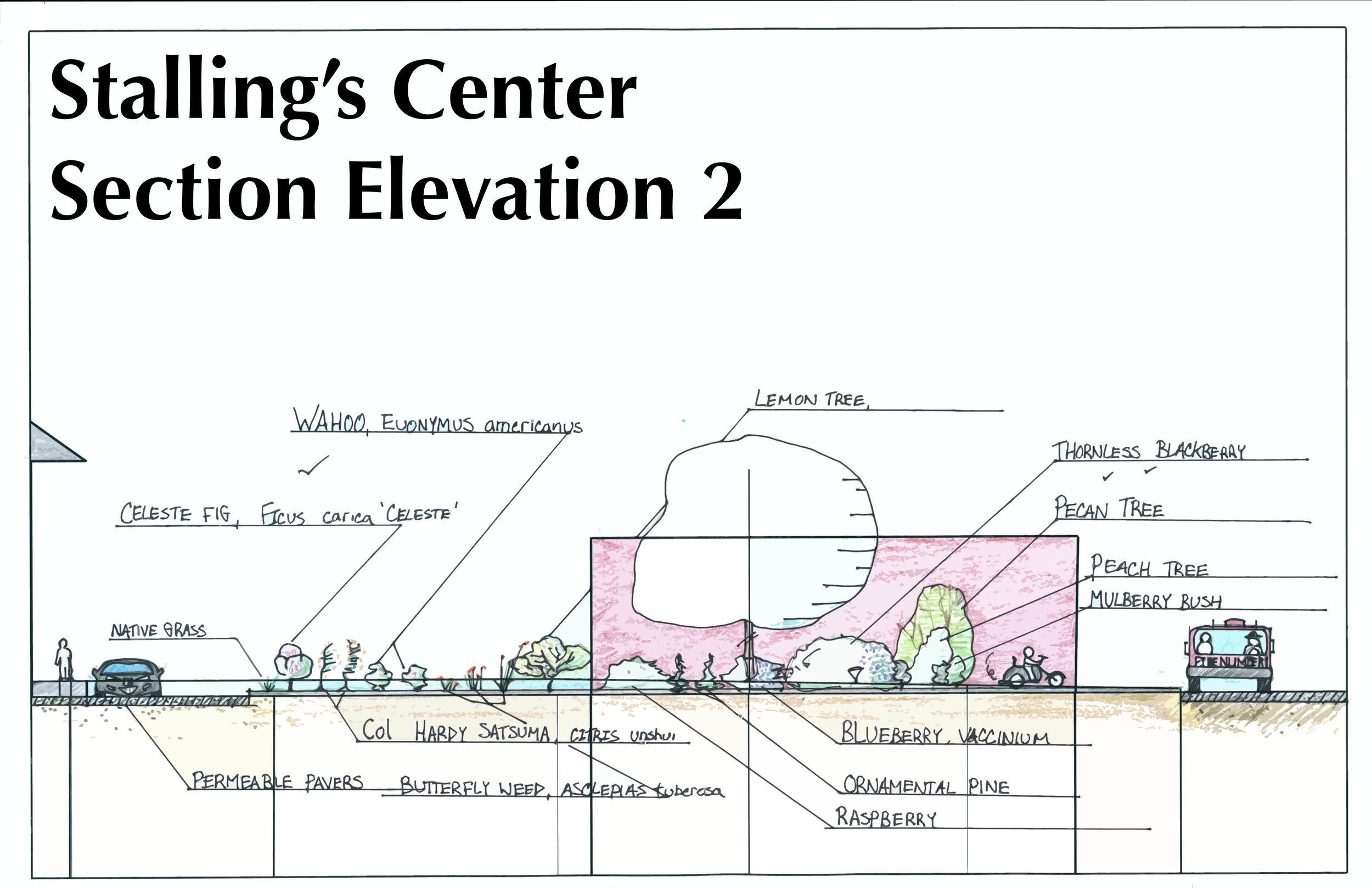 Stallings Center - Section