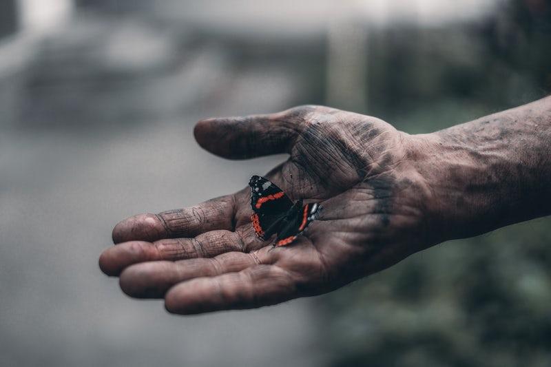 butterfly in hand.jpeg