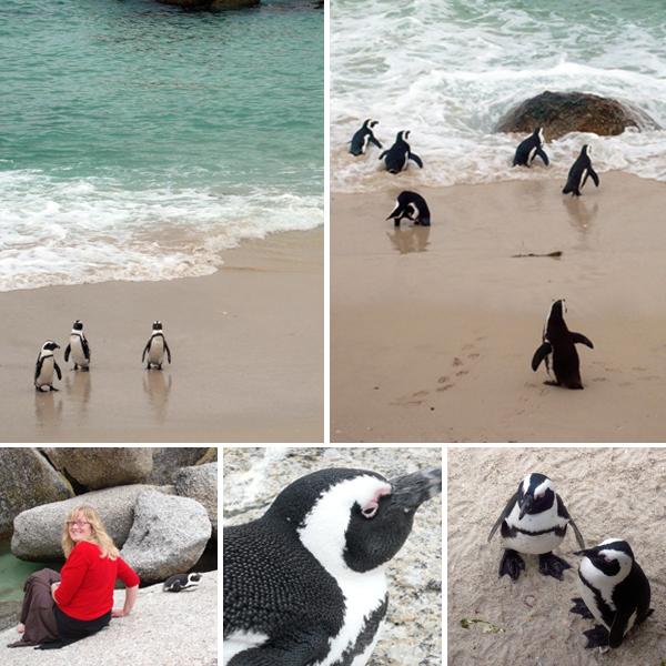 penguincollage