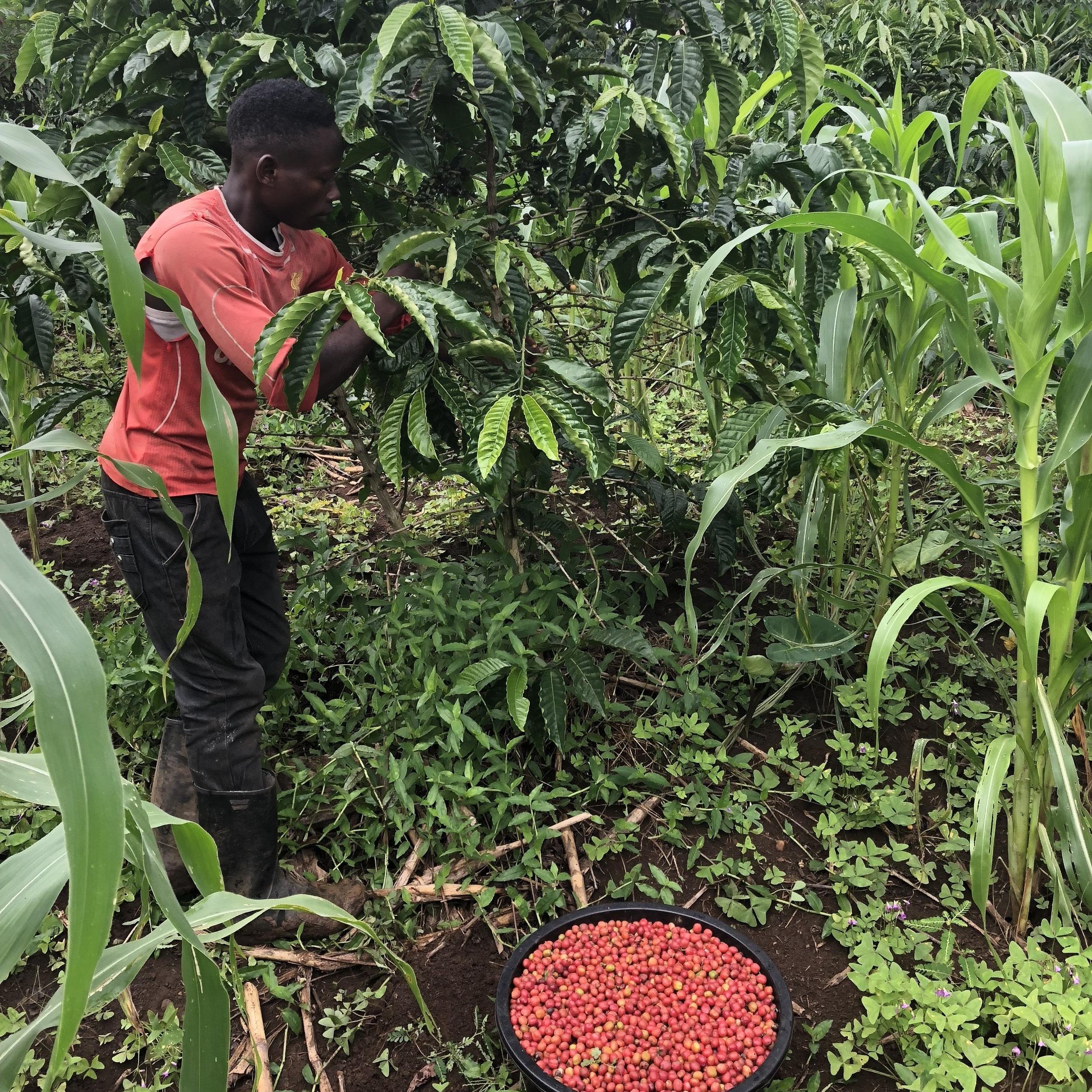 ...employed more than 70 ugandans -