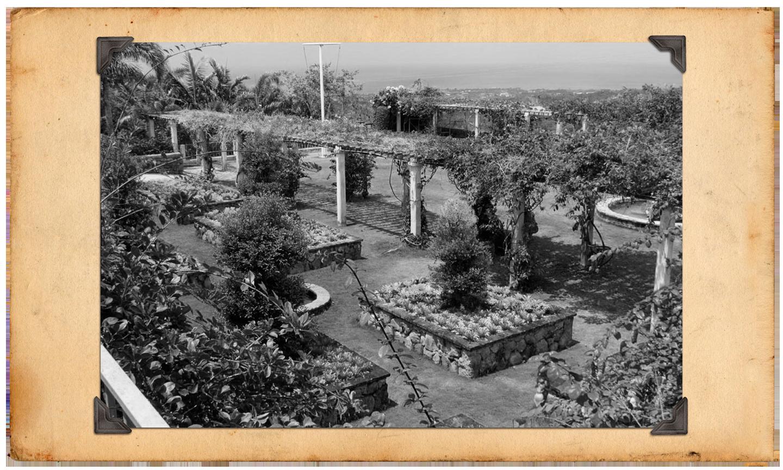 Finding Nevis Gardens Tour